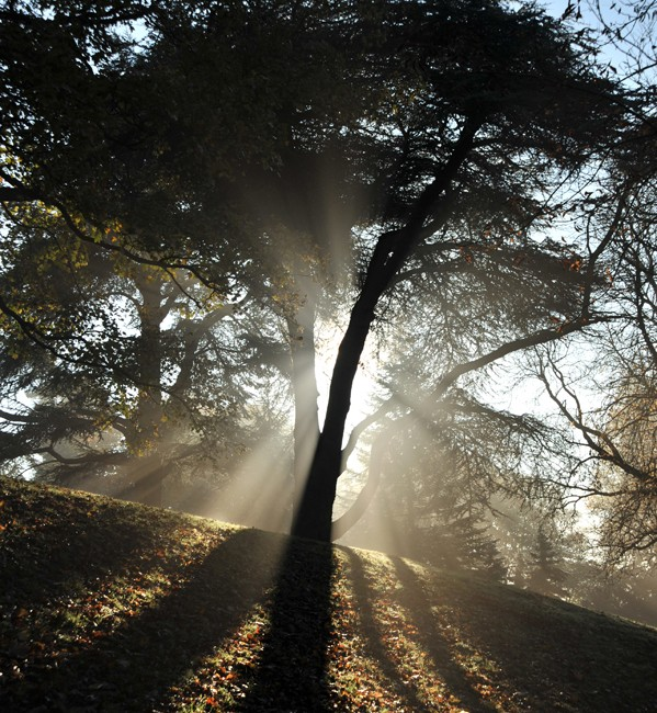 Sun rays through tree